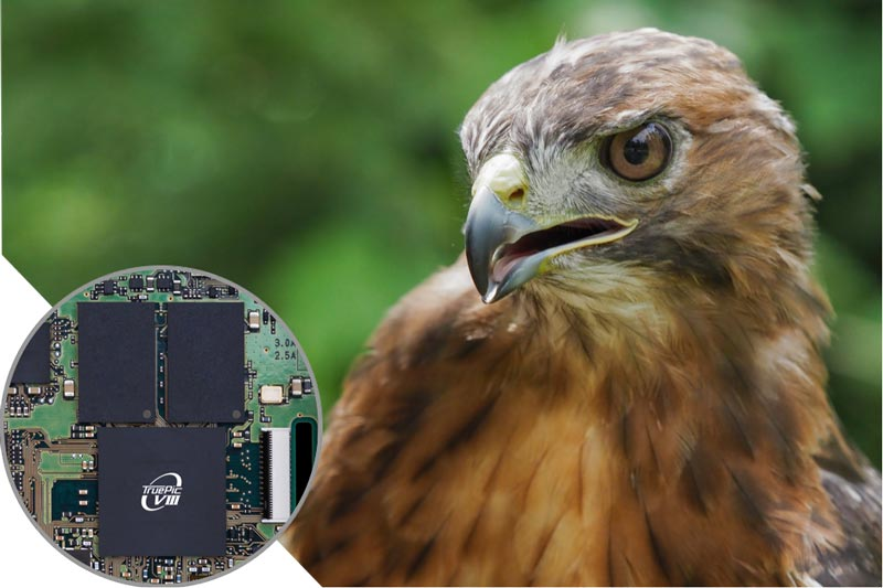 Image of TruPic Turbo and a hawk